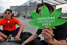 В Уругвае принят законопроект о полной легализации каннабиса