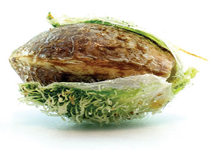 Бесплатные семена конопли от интернет-магазина Errors-seeds.com.ua