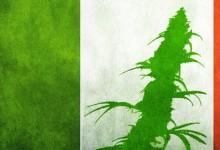 Представительство итальянского Турина призывает к легализации марихуаны