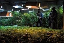 Война против наркотиков: утекшая информация указывает на расхождение мнений ...