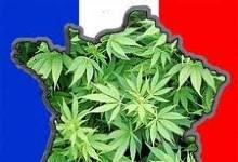 Как обстоят дела с легализацией марихуаны во Франции?