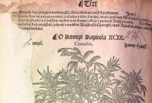 О гербариях и их авторах