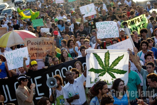 Общественные движения за легализацию: Почему важно заявить о себе