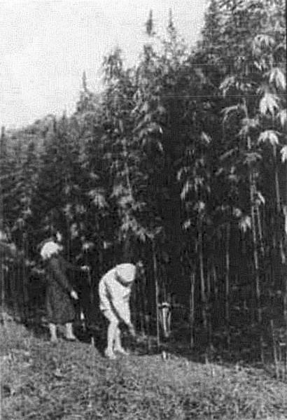 История конопля русь как продать семя канабиса